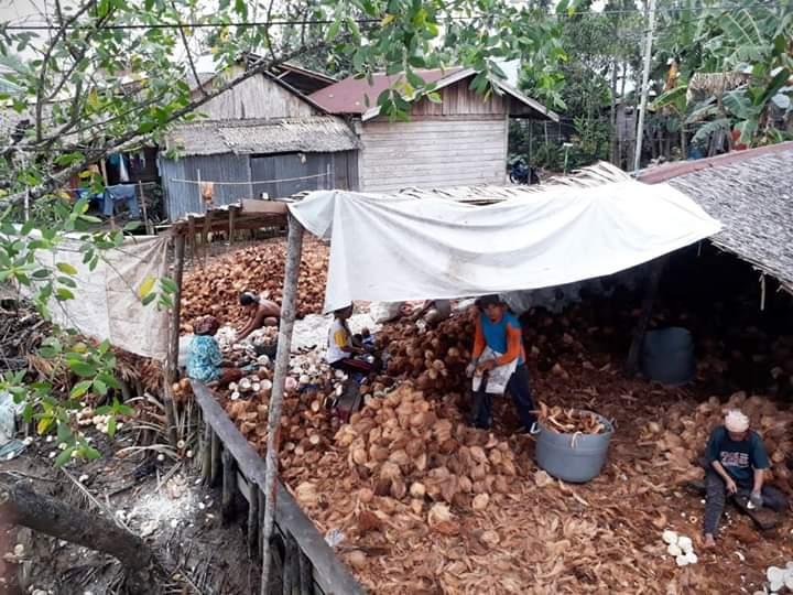Turunnya harga kelapa, membuat para petani di Tanjabbar, mengeluh. Salah satu sentra kelapa di Provinsi Jambi itu disebut tak menguntungkan petani.