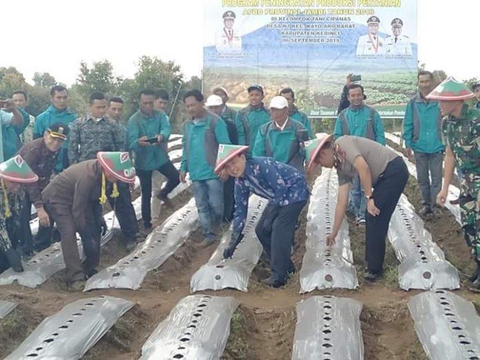 Dari 1.468 varietas yang sudah didaftarkan, 38 varietas dari Provinsi Jambi yang 13 diantaranya berasal dari kabupaten Kerinci. Tampak bupati dan gubernur serta Dirjen berada di lahan pertanian.