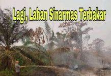 Izhar Majid, Anggota Dewan Provinsi Jambi turun langsung ke lokasi kebakaran lahan, Sabtu (21/09/2019) siang. Ada 3 desa terdampak, termasuk lahan group Sinarmas di Kecamatan Pamenang, Kabupaten Merangin.