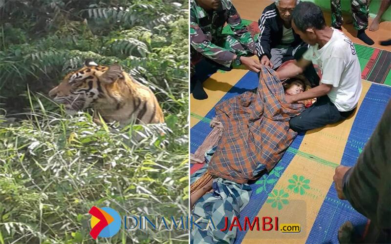 Warga Tewas di Serang Harimau Muara Enim