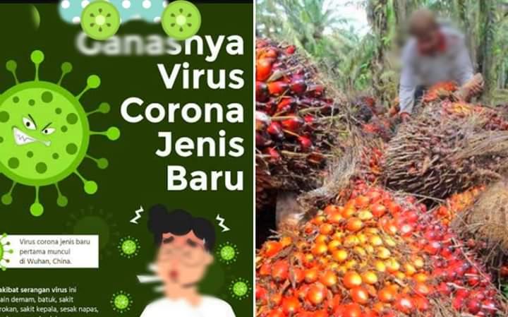 Efek Virus Corona, Harga Sawit di Jambi Terjun Bebas