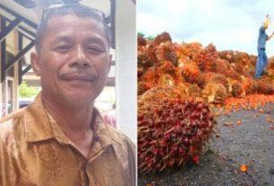 India Buka Pasar CPO Indonesia, Ini Dinilai Tak Untungkan Petani di Jambi