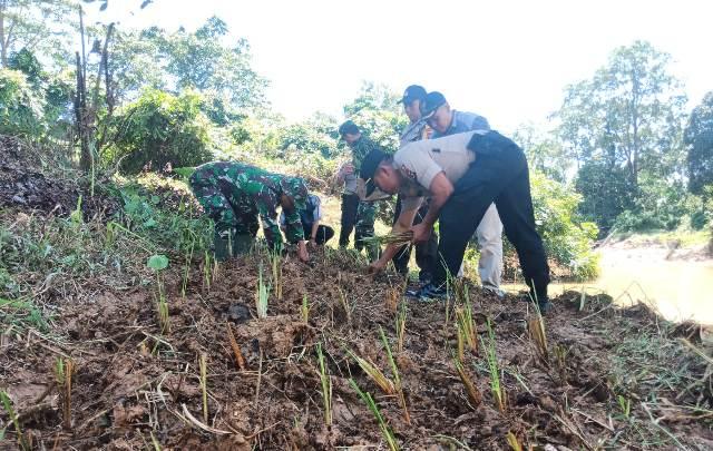 Jum'at (6/3/2020) siang, Kapolsek Pamenang, Iptu Fatkur Rohman bersama anggotanya tanam rumput Vetiver di pinggir Sungai Rasau