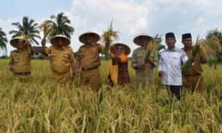 Panen padi sawah, Wabup berharap lahan kosong dapat dimanfaatkan sebagai lahan sawah.