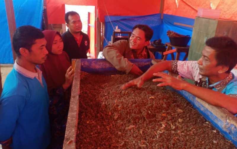 Budidaya maggot di Kabupaten Merangin mengeliat, dari bahan sampah jadi penghasil rupiah. Menggiurkan dan membantu lingkungan