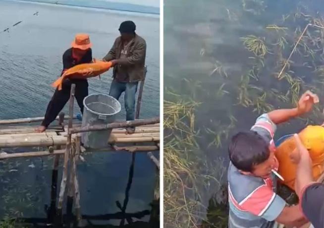 Waduh, Pemancing Ini Strike Ikan Mas Raksasa 15 Kg di Danau