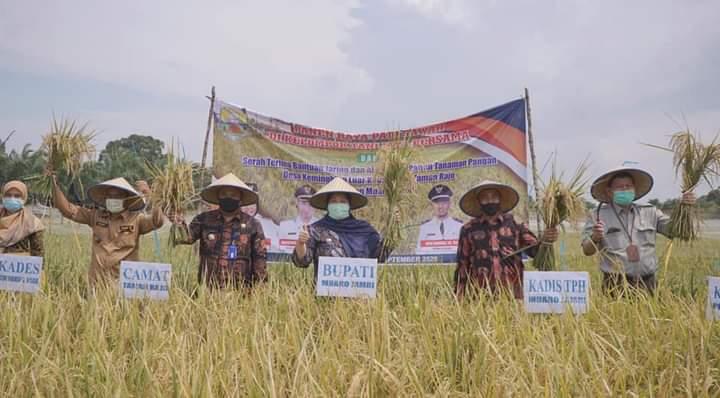 Panen Padi Lagi, Bupati Salurkan Bantuan Ke Petani Kemingking