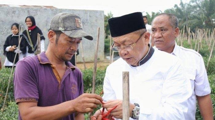 Para petani menilai, CE lebih natural sisi merakyatnya dibandingkan kandidat lain yang ikut berkontestasi di Pilgub Jambi.