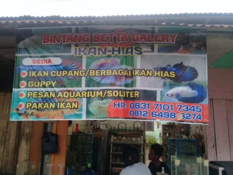 Info Pemesanan Ikan Hias