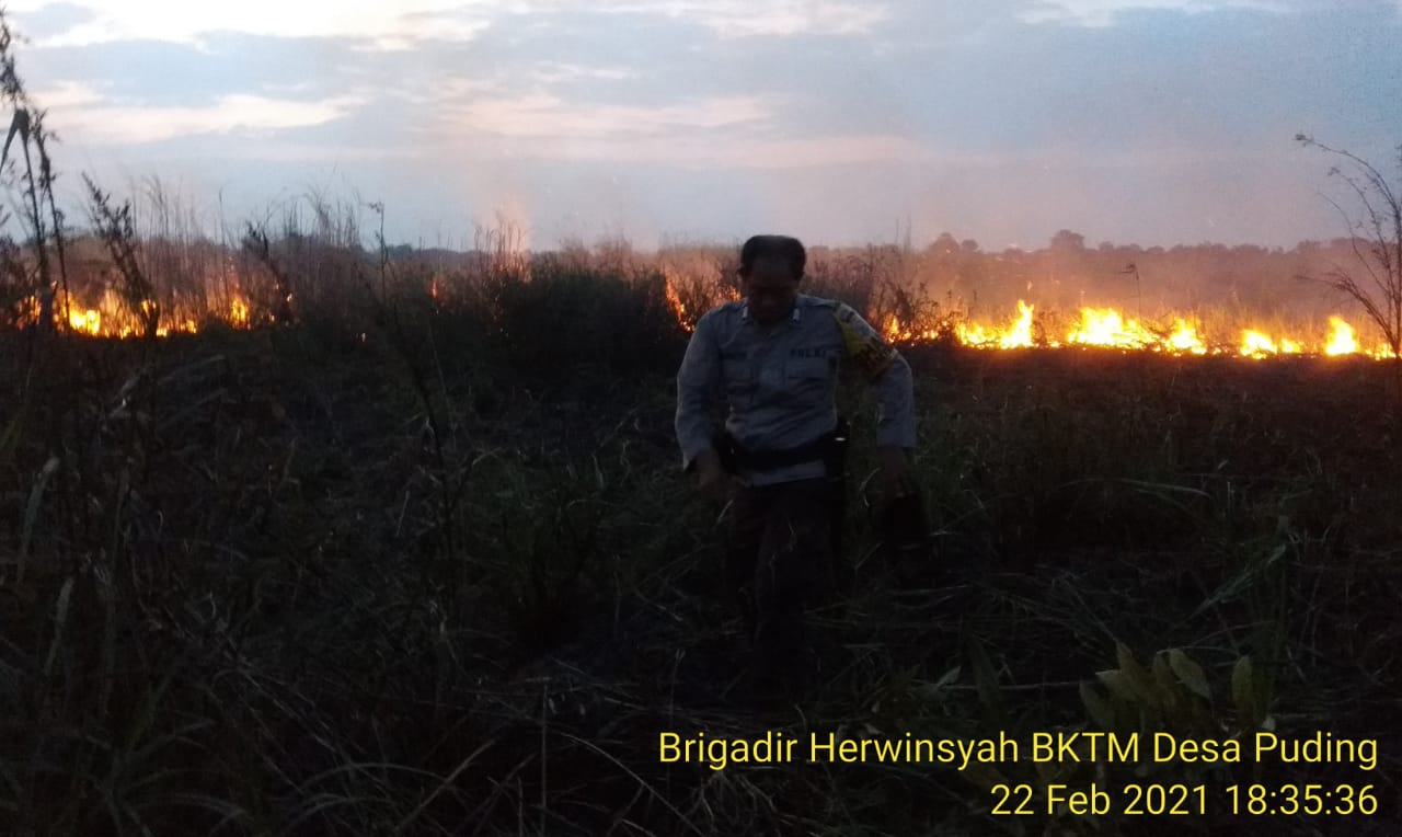 Polres Muaro Jambi berhasil memadamkan kobaran api, yang membakar lahan perkebunan PT SMP di Desa Puding. Kok bisa?