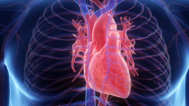 Jantung merupakan salah satu organ tubuh yang memiliki peran sangat vital, maka dari itu kita harus jaga kesehatan itu dengan minum ini secara rutin.