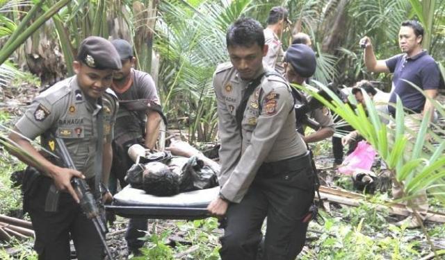 Selama sebulan, kelompok tetoris tebar teror di Papua, KKB akhirnya berhasil dilumpuhkan TNI Polri. Sebanyak 4 orang dintatakan tewas dan 11 lainnya, mengalami luka-luka.