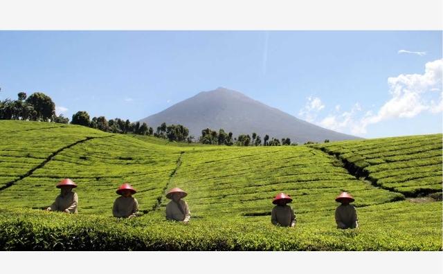 Siapa sangka, ternyata sejarah kebun atau Unit Usaha Teh Kayo Aro di Kerinci yang saat ini milik PTPN VI, pertama kali dirintis oleh belanda. Dari tahun ke tahun, usaha teh kayu aro ini, terus mengalami perubahan.